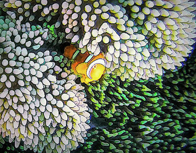 Photograph - DiveArt - Lonely Clownfish by Ifototravel - Irene And Tony Isaacson