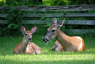 Grimm Fairy Tales - Doe and Fawn by Mary Machare