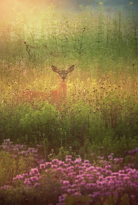 Photograph - Doe at Springfield Bog by Rob Blair