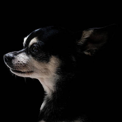 Photograph - Dog in Profile #2 by Christine Buckley