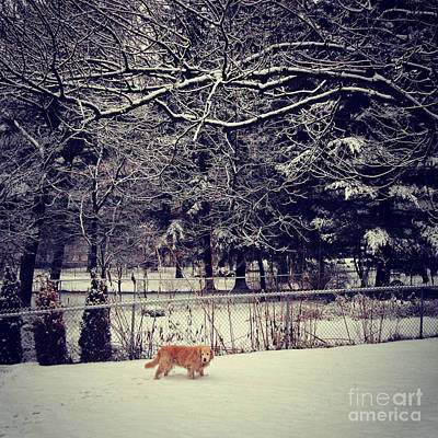 Frank J Casella Royalty-Free and Rights-Managed Images - Dog Walking Under the Snowy Trees by Frank J Casella