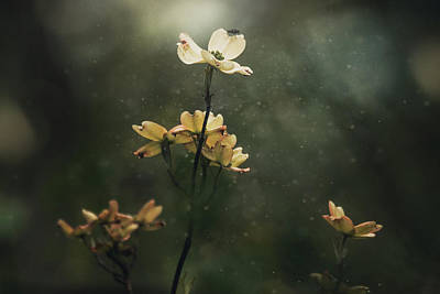 Photograph - Dogwood and the Fly by Jessica Nelson