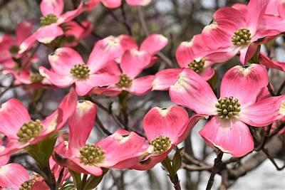 Steampunk - Dogwood Blooms by Karen Largent
