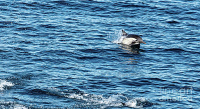 Photograph - Dolphin by Debbie D Anthony