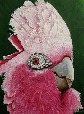 Wild Horse Paintings - Dont be a galah, stay home by Debra Dickson