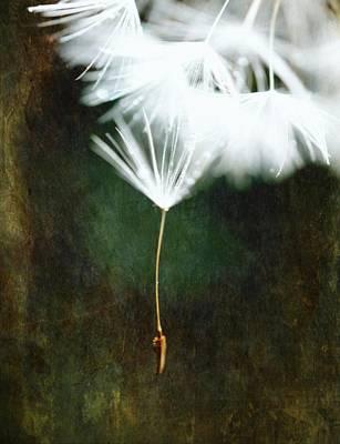 Priska Wettstein Pink Hues - Dont let me fall - Dandelion Art #2 by Marianna Mills