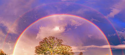 Royalty-Free and Rights-Managed Images - Double Rainbow Panorama Over Barren Trees by Gregory Ballos