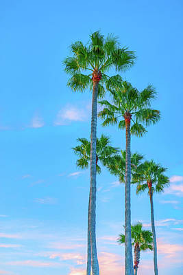 Royalty-Free and Rights-Managed Images - DP Palm Trees 2 by Lonnie Christopher
