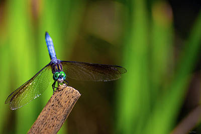 Photograph - Dragonfly by Crystal Wightman