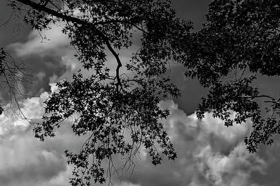 World Forgotten Rights Managed Images - Dramatic Clouds and Leaves Royalty-Free Image by Robert Ullmann