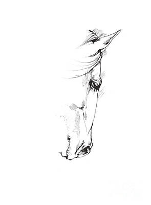 Animals Drawings - Drawing of a horse 2017 02 05 by Angel Ciesniarska
