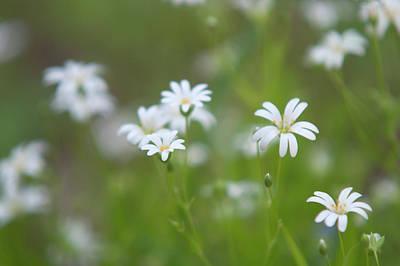 Grace Kelly - Dreamland with Star Flowers by Jenny Rainbow