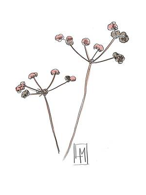 Studio Grafika Vintage Posters - Dried Seed Heads by Luisa Millicent