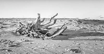 Old Masters Royalty Free Images - Driftwood on Atlantic Beach - Fort Macon NC Royalty-Free Image by Bob Decker