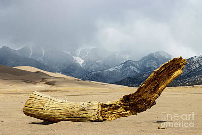 Steven Krull Royalty-Free and Rights-Managed Images - Driftwood on the Dunes by Steven Krull