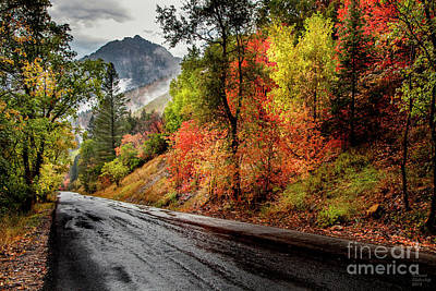 Photograph - Drive into Fall by David Millenheft
