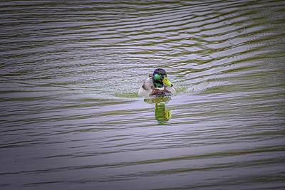 Word Signs - Duck eye #k0 by Leif Sohlman