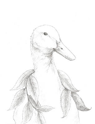 Animals Drawings - Duck Sketch by Christy Beckwith