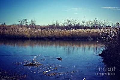 Frank J Casella Royalty-Free and Rights-Managed Images - Ducks at Prairie Lake by Frank J Casella