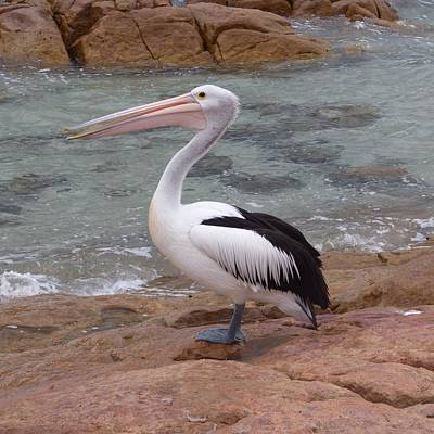 Graduation Sayings - Dunsborough Pelican by Michaela Perryman