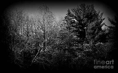 Frank J Casella Royalty-Free and Rights-Managed Images - Dusk Light Spring Magnolia - Black and White by Frank J Casella