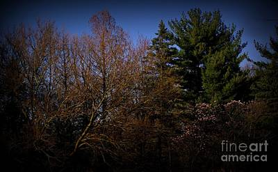Frank J Casella Royalty-Free and Rights-Managed Images - Dusk Light Spring Magnolia by Frank J Casella
