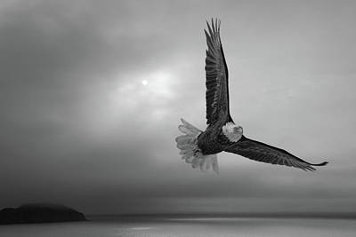 Wild Weather - Eagle in the gray Newfoundland light by Murray Rudd