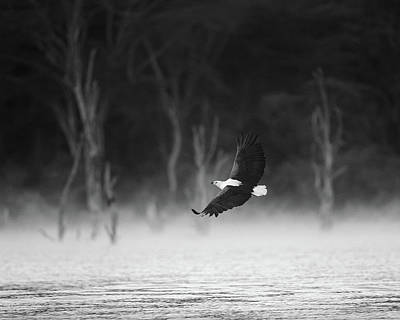 Classical Masterpiece Still Life Paintings - Eagle over African misty lake by Murray Rudd