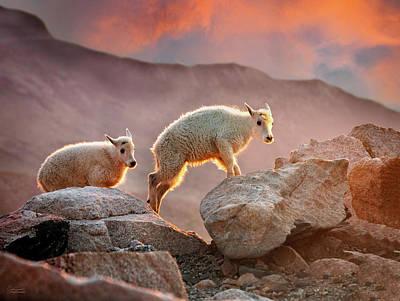 Unicorn Dust - Early Morning Mountain Goat Babies by Judi Dressler