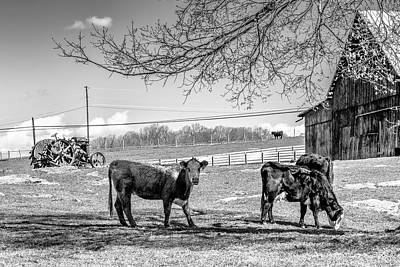 Animals Royalty-Free and Rights-Managed Images - Early Spring Grazing by Jim Love