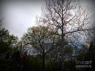 Frank J Casella Royalty-Free and Rights-Managed Images - Early Spring Trees at Sunset by Frank J Casella