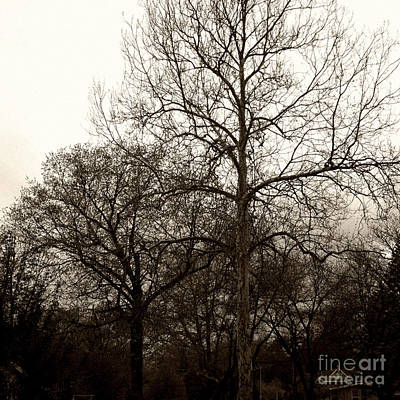 Frank J Casella Royalty-Free and Rights-Managed Images - Early Spring Trees at Sunset - Sepia - Square by Frank J Casella