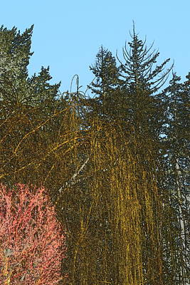Jerry Sodorff Royalty-Free and Rights-Managed Images - Early Spring Trees With Blue Sky by Jerry Sodorff