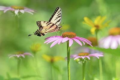 Classic Golf - Eastern Tiger Swallowtail 2021 02 by Judy Tomlinson