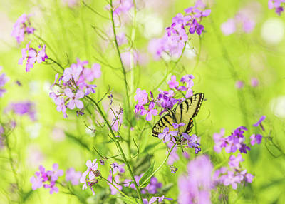 Featured Tapestry Designs - Eastern Tiger Swallowtail Butterfly 4 - Nature Photography by Amelia Pearn