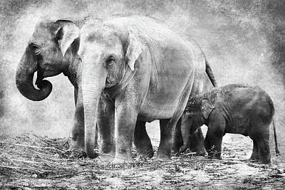 Animals Digital Art - Elephant family black and white by Mihaela Pater