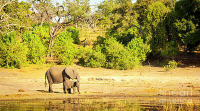 Royalty-Free and Rights-Managed Images - Elephant Herd Africa by THP Creative