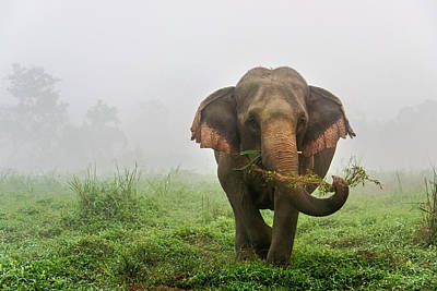 Lee Craker Royalty-Free and Rights-Managed Images - Elephant in the Morning Mist by Lee Craker