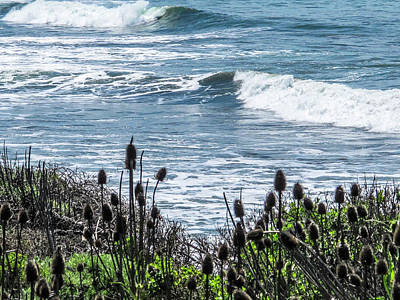 Photograph - Ellwood Beach by Beth Taylor