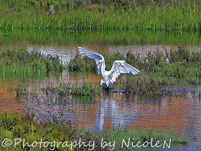 Surrealism Royalty-Free and Rights-Managed Images - EN Surreal Egret 1A by Photography By Nicole N