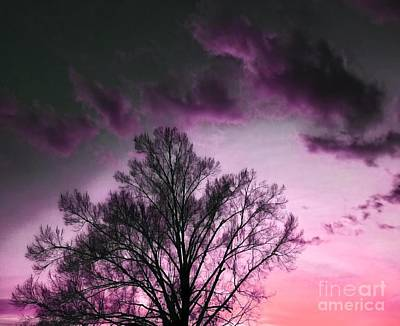 Anchor Down - Enchanted Evening Sky by Rachel Hannah