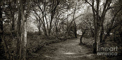 Royalty-Free and Rights-Managed Images - Enchanted Path Panorama by Robert Gardner