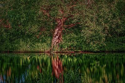 Unicorn Dust - Enchanted tree #l3 by Leif Sohlman