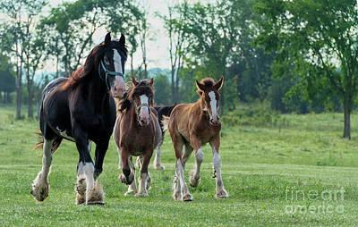 Book Quotes - Equine Pastures by Nina Stavlund
