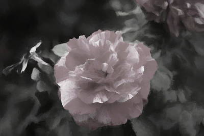 Clouds Rights Managed Images - Essence of Rose Royalty-Free Image by Helyn Broadhurst Cornille
