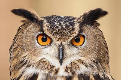 Photograph - Eurasian Eagle Owl -011 by Matt Cuda