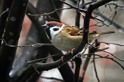Impressionist Landscapes - Eurasian tree sparrows - Passer montanus by Hajarimanitra Rambeloarivony