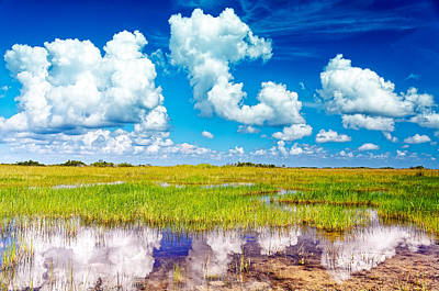 Fine Dining - Everglades Landscape with clouds reflection by Rudy Umans
