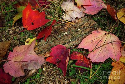 Beastie Boys - Fall 2 by Crystal Marchianda