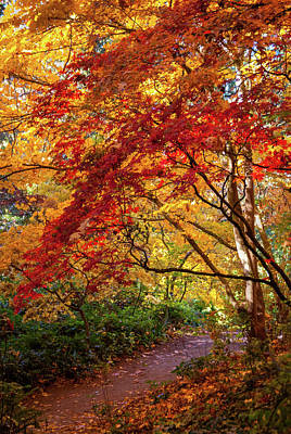 Beer Blueprints - Fall Colors in Trees at Seattle Arboretum by Cindy Shebley